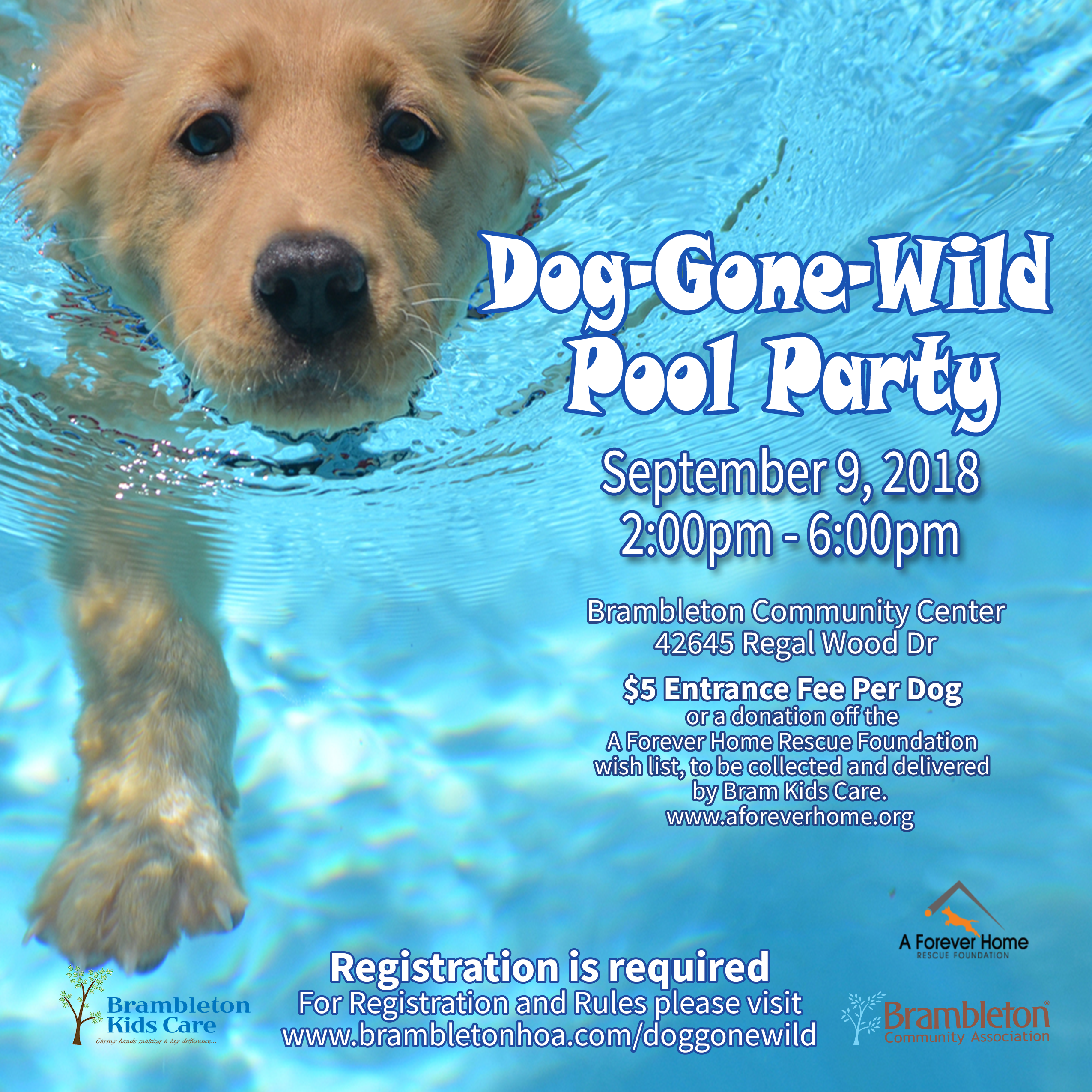 Dog_Pool_Flyer_Web2018